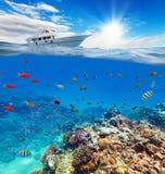 Unterwasserkorallenriff mit Horizont und Wasser stockfoto