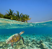 Unterwasserkorallenriff mit Tropeninsel stockfoto