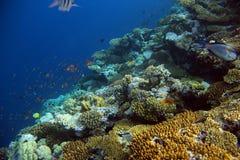 Unterwasserkorallenriff mit tropischen Fischen Lizenzfreie Stockfotos