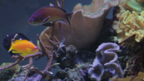 Unterwasserkorallenriff und Fische stock footage