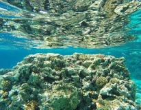 Unterwasserkorallenriffhintergrund stockbilder