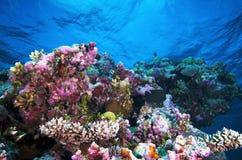 Unterwasserlandschaft Stockfoto