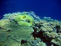 Unterwasserlandschaft Lizenzfreies Stockbild