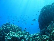 Unterwasserlandschaft Stockbilder
