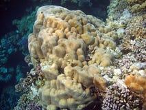 Unterwasserlandschaft Lizenzfreie Stockfotos