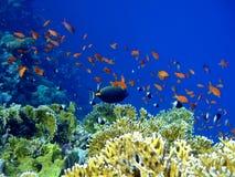 Unterwasserlandschaft Stockfotos