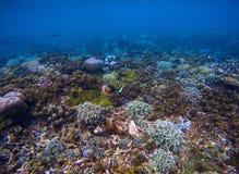 Unterwasserlandschaft der Korallenmeerunterseite Unterwasserfoto der tropischen Küste Lizenzfreies Stockbild