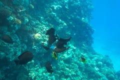 Unterwasserlandschaft des Roten Meers mit tropischen Fischen stockfoto