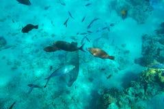Unterwasserlandschaft des Roten Meers mit tropischen Fischen lizenzfreies stockbild