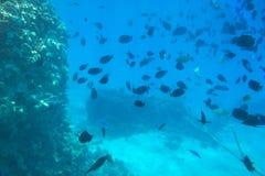 Unterwasserlandschaft des Roten Meers mit tropischen Fischen stockbilder