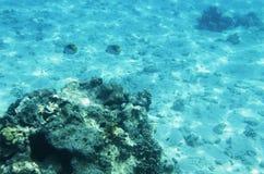 Unterwasserlandschaft mit Korallen Stockbild