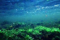 Unterwasserlandschaftstrinkwasser Stockfotos