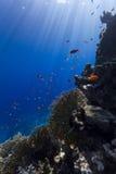 Unterwasserleben Lizenzfreie Stockbilder