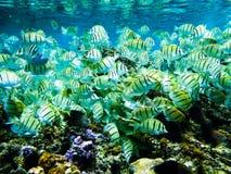 Unterwasserleben des Korallenriffs Stockbilder