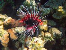 Unterwasserleben von tropischem Meer Stockbild