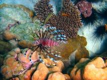 Unterwasserleben von tropischem Meer Lizenzfreies Stockfoto