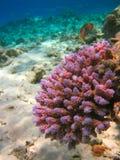 Unterwasserleben von tropischem Meer Lizenzfreies Stockbild