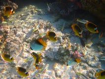 Unterwasserleben von tropischem Meer Stockfotos