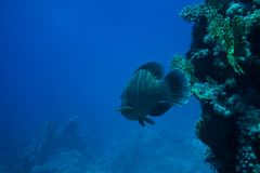 Unterwasserlebenlandschaft im Roten Meer Lizenzfreie Stockfotografie