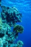 Unterwasserlebenlandschaft im Roten Meer Lizenzfreies Stockfoto