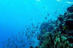 Unterwasserlebenlandschaft im Roten Meer Stockbild