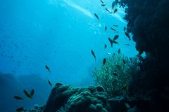 Unterwasserlebenlandschaft im Roten Meer Stockbilder