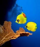 Unterwasserlebensdauer Lizenzfreies Stockfoto