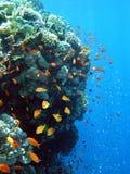 Unterwasserlebensdauer Stockfotografie