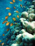 Unterwasserlebensdauer Lizenzfreies Stockbild