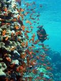 Unterwasserlebensdauer Stockfoto