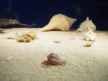 Unterwasserlebensdauer Stockfotos