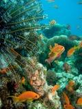 Unterwasserlebensdauer Lizenzfreie Stockbilder