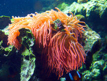 Tropisches Seeleben Lizenzfreies Stockfoto