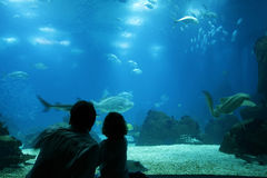 Unterwasserlebensdauer am Aquarium Lizenzfreies Stockfoto