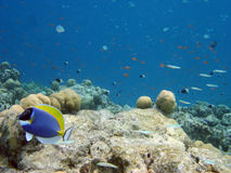 UnterwasserMaldives Lizenzfreie Stockfotos