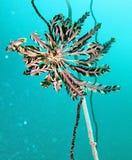 Unterwassermarinelebensdauer stockbilder