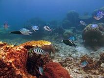 Unterwassermeeresflora und -fauna, Korallen, Fische und buntes Lizenzfreie Stockbilder