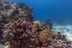 Unterwasserobservatorium Marine Park Lizenzfreies Stockfoto