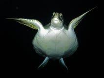 Unterwasserobservatorium Marine Park Stockfotografie