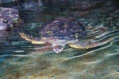 Unterwasserobservatorium Marine Park Stockbilder