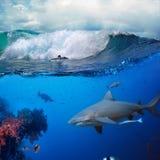 Unterwasserozeangeschichte mit Surfer und Haifisch lizenzfreie stockbilder