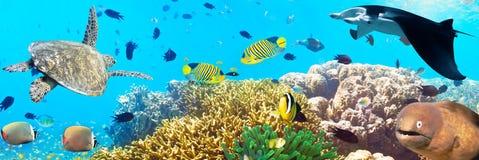 Unterwasserpanorama Lizenzfreie Stockfotografie
