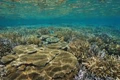 Unterwasserpazifischer ozean gute Zustand des korallenriffs Stockfoto