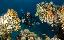 Unterwasserphotograph Lizenzfreies Stockbild