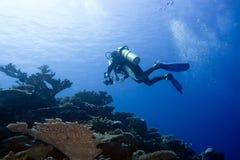 Unterwasserphotograph Lizenzfreie Stockfotografie