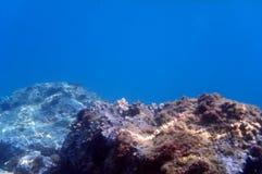 Unterwasserriff Stockfoto