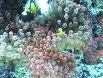 Unterwasserschuß von korallenroten Maldives-Inseln Stockfoto