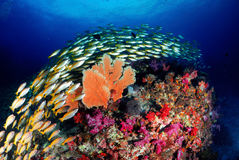 Unterwasserschulungsfische und Korallen so wunderbar stockbild