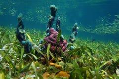 Unterwasserschwämme und Masse von kleinen Fischen Lizenzfreie Stockfotografie