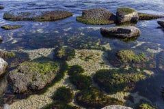 Unterwasserseefelsen mit Algen Stockfotos